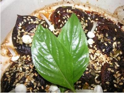 Dim Sum - Asiatisches Fingerfood, gewickelt und gerollt